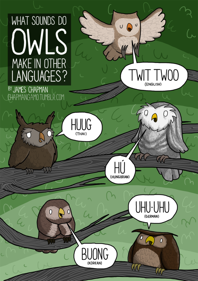 Owl noises around the world